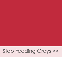 stop-feeding-greys