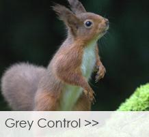 Grey-Control