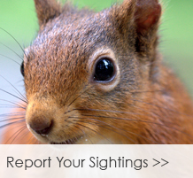 Report-Your-Sightings