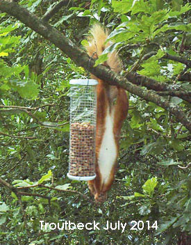 © Westmorland Red Squirrels