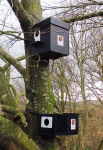 The New-Design Nestbox and Feeder in Polypropylene