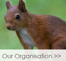 Our-Organisation