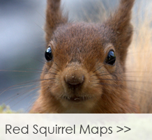 red-squirrel-maps