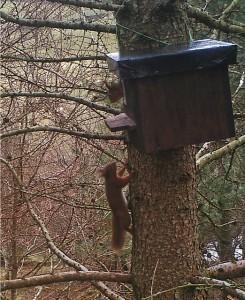 Squirrel nestbox