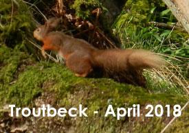 © Westmorland Red Squirrels